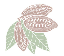 cacao pod illustration